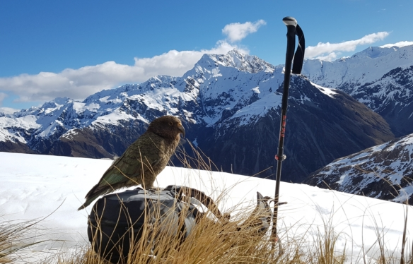 Explore Arthurs Pass with Adventure By Nature