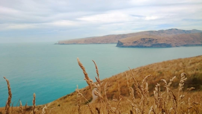 Godley Head day walk with Adventure by Nature